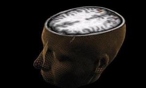 Εγκέφαλος και έντερο μπορούν να ρυθμίσουν τη διάρκεια ζωής