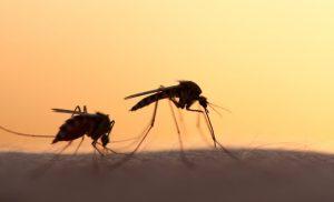 Διασωληνωμένος νεαρός μετά από… τσίμπημα κουνουπιού- Με βαριάς μορφής μηνιγγίτιδα στην Εντατική