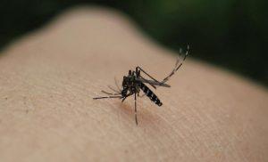 «Καρφιά» Ιατρικού Συλλόγου: Εγκληματική ολιγωρία της Περιφέρειας στην καταπολέμηση των κουνουπιών!