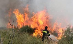 Φωτιά σε δασική έκταση στις Σέρρες