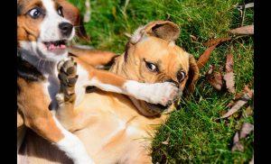 Νόμος για τα κατοικίδια ζώα: Έρχονται νέες αλλαγές