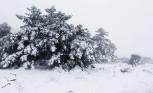 Στην «κατάψυξη» η χώρα – Στα «λευκά» έχουν ντυθεί πολλές περιοχές