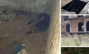 Φιλόζωοι καταγγέλλουν ότι άνδρας σκοτώνει σκύλους εγκλωβίζοντάς τους σε οικοδομή- ΦΩΤΟ