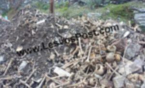 Πέταξαν ανθρώπινα κρανία και οστά νεκρών σε δρόμο της Λέσβου! Προσοχή: Ανατριχιαστικές εικόνες [pics]