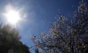 Καλλιάνος: Επιστρέφει η άνοιξη – Πενθήμερο με ήλιο και 24 βαθμούς Κελσίου