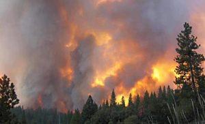 Πυρκαγιά στο Νεοχώρι Πλωμαρίου στη Λέσβο