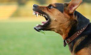 Τραγικό! Σκύλος «έφαγε» 11χρονο! – «Εξαφανίστηκε» η ιδιοκτήτριά του (video)