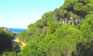 Eurostat: Το 41,7% της επιφάνειας της ΕΕ καλύπτεται από δάση, 44,5% στην Ελλάδα