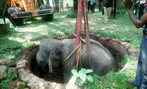 Η στιγμή διάσωσης μικρού ελέφαντα που έπεσε σε πηγάδι Κάλεσε σε βοήθεια