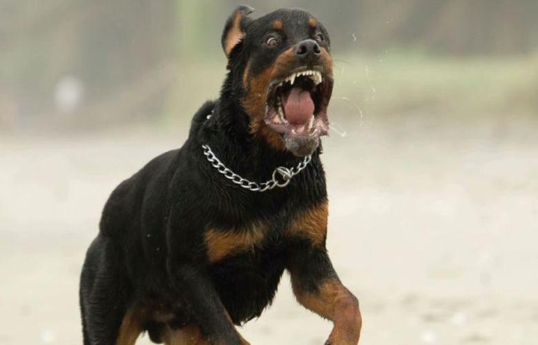 Νεκρό μετά από επίθεση σκύλου βρέφος τριών μηνών